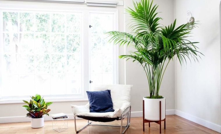 3-tall-indoor-plants-with-big-leaves-759x500