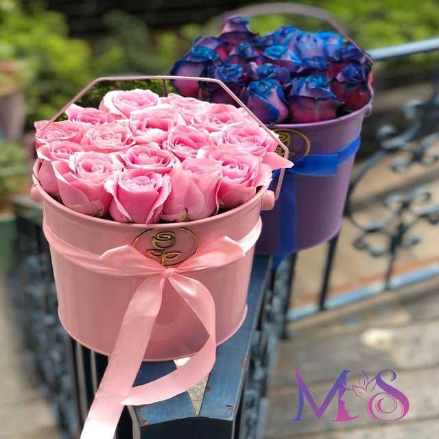 گل رز صورتی و بنفش رنگ خاص