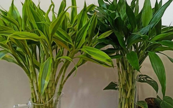 bamboos-animals